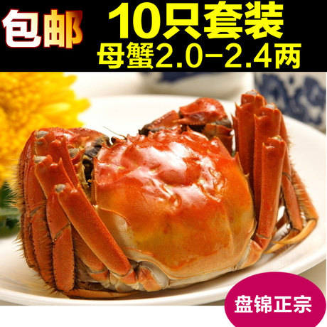 盘锦螃蟹河蟹牛腩大闸蟹鲜活母蟹河蟹2.0-2.4白萝卜炖窍门怎么做稻田图片