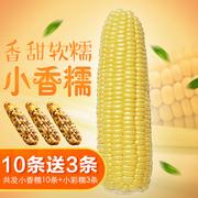 甜玉米新鲜